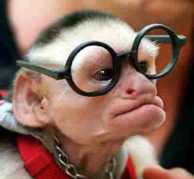 Monkey_Nerd_with_Glasses.jpg